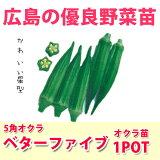 野菜苗 オクラ ベターファイブ 実生苗 1POT【販売期間終了間近!】【納期指定不可】