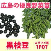 野菜苗エダマメ黒エダマメ黒枝豆実生苗