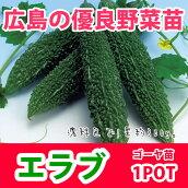 野菜苗ゴーヤニガウリエラブ苗