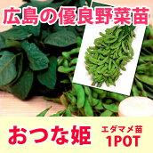 野菜苗エダマメ枝豆おつなひめ実生苗