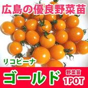 野菜苗ミニトマトリコピーナゴールド苗