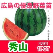 野菜苗スイカ秀山シュウザン接木苗