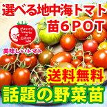 6種類から選べる地中海トマトの苗お試し3品種【送料無料】【沖縄・北海度発送不可】