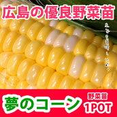 野菜苗トウモロコシスイートコーン苗夢のコーン