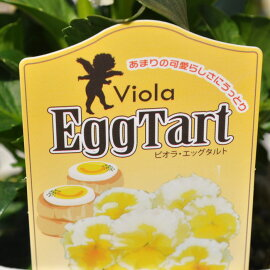 【花苗】【最新品種】ビオラエッグタルトEggTart