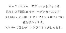 【花苗】ローダンセマムアプリコットジャム3ポットセット