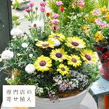 専門店の寄せ植え ギフト ワンランク上 選べる雰囲気 寄植え 選べる鉢 送料無料 敬老の日にも