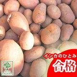 じゃがいも 種芋 インカのひとみ インカの瞳ジャガイモの種 1kg 【検査合格済】【サイズ混合】【他のジャガイモの種なら同梱可能】