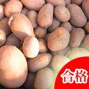 【春植え予約ジャガイモ】【種芋】ジャガイモ じゃがいもの種 1kg【インカのひとみ】【検査合格済】【サイズ混合】【05P01Mar15】【HLS…