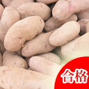 【予約受付中】じゃがいも 種芋 ノーザンルビー 種芋 ジャガイモの種 1kg【検査合格済】【サイズ混 ...