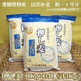 <押し麦(愛媛県産はだか麦)1Kg×3袋計3Kg>約一ヶ月分(1日3合の場合)押麦雑穀藤田精麦