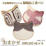 <おまかせ!自家製酵母でつくる 福福ねこ食パン3匹セット> ねこパン 猫パン ネコパン 猫食パン ねこ食パン ネコ食パン しょくぱん 猫 カフェピルツ CafePilz ※45日以内に順次出荷 【冷凍配送】