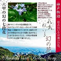 六甲、幻の七段花神戸物語