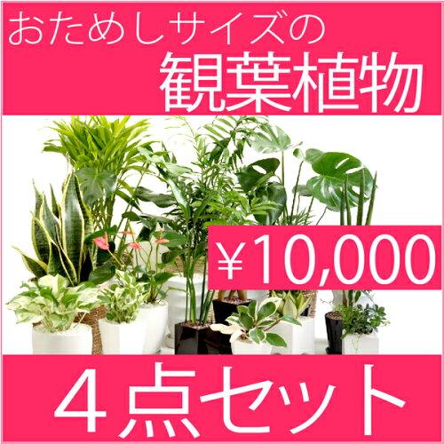観葉植物 選べる 4点お試し セット インテリア 新築祝い お祝い 観葉植物 父の日