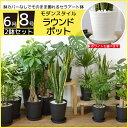 送料無料 観葉植物 セット 8号+6号 セラアート鉢 大型 インテリア...