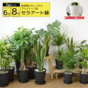 観葉植物 2鉢セット 8号鉢+6号鉢 セラアート鉢 大型 イ