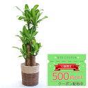 ◆限定クーポン配布中◆観葉植物 幸福の木 8号 鉢カバー付セ...
