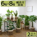 送料無料 観葉植物 セット 8号+6号 ツートーン 鉢カバー付き 大型...