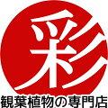 観葉植物の専門店 彩植健美