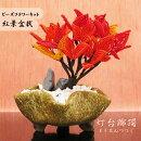 ビーズフラワーで作るドウダンツツジの紅葉盆栽キット