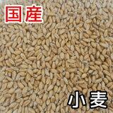 1/1〜1/5期間限定50%OFF【国産】小麦10kg