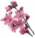 PPグルメシート 桜 1000入おせち 重箱 正月 迎春 おもてなし ラッピング 料理飾り