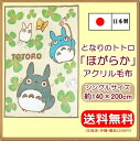 Totoro18