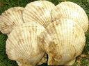 【天然】殻つきホタテ貝「5枚セット」10P14feb11