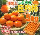 柿/庄内柿/種なし/ご自宅用/訳あり/たっぷり5kg(約30...