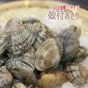 【お試し1パック】ボイル殻付あさり 砂抜き済み250gパック濃厚で美味しいボイル...
