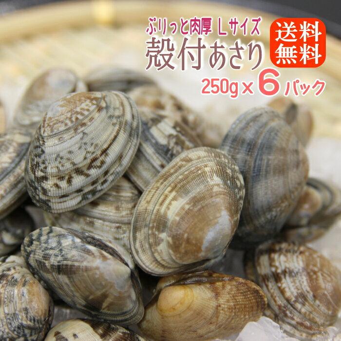 貝類, アサリ  250gx6(1.5kg)