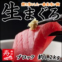 <生まぐろ刺身用約1.2kgブロック(キハダマグロ・鮪)>【...