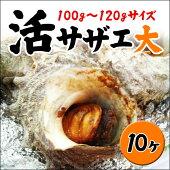 業務用<活サザエ>10ヶ!(1ヶ100〜120g)お刺身に!つぼ焼きに!