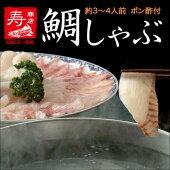 【冷凍・冷蔵同梱可】活魚鯛のしゃぶしゃぶ