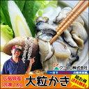 海のミルク!!広島県産の冷凍牡蠣をお届けいたします。送料無料【クニヒロ水産】広島産冷凍牡蠣(カキ)!!たっぷり1kg(冷凍便)