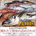広島市中央卸売市場から新鮮なお魚をお届けします。【送料無料】獲れたて鮮魚の詰合せ(冷蔵便...