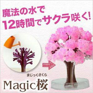 「自分で咲かせる不思議な桜!」12時間で本物の桜の様にモコモコ育つ不思議なマジック桜【TVで...