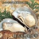 庄内浜産岩牡蠣