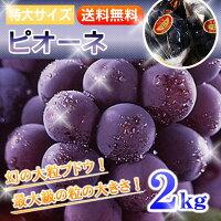 ブドウの大様:ピオーネ!大粒&種無し!たっぷり2kgはお買い得!【クール便で送料無料!】3〜5房セットはじける夏をお届けします!ぶどう:葡萄