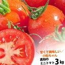 【送料無料】 プチトマト約3kg高知のミニトマト沖縄県と離島は配送不可!北海道へお届けの商品は1個あたり380円の送料が加算されます!