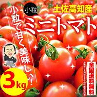 小粒のミニトマトプチトマトとまと