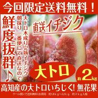 たっぷり2キロ&大玉16〜24玉入りあま〜い無花果[完熟いちじく]