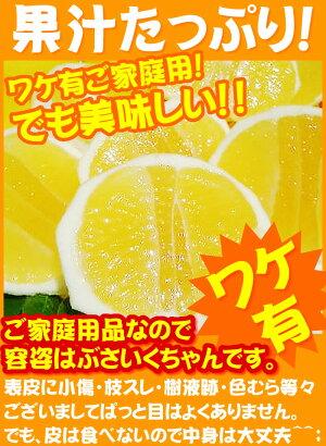 訳アリ【送料無料】ご家庭用初夏の香り!土佐小夏♪甘酸っぱい果汁が!お口いっぱいに広がります!ワケ有りサイズお任せ♪日向夏・ニューサマーオレンジ!愛媛県では「ニューサマーオレンジ」!宮崎県では「日向夏」約