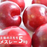 【送料無料】プラム(すもも)メスレー約5kg入り朝積み新鮮便!