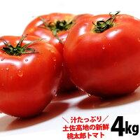 【全国送料無料】土佐の高知の新鮮トマトたっぷり約4kg産直龍馬くん