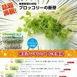 ブロッコリーの新芽(ブロッコリースプラウト)12パック入【生鮮野菜】