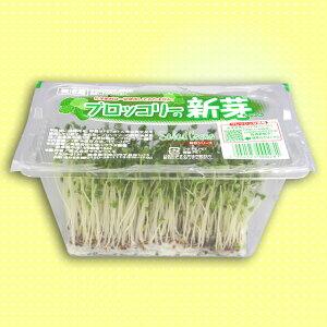 シャキシャキ歯ごたえ スルフォラファン ビタミンAが豊富>【スーパーフード/機能性野菜/機...