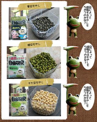 緑豆もやし・子大豆もやし・黒豆もやし