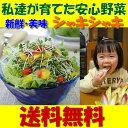 【送料無料】新鮮!産地直送!何度でもご注文頂けます●おためしスプラウト11品野菜セット【国産チコリ入り】【野菜セット】【新鮮野菜…