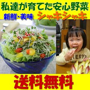 【送料無料】新鮮!産地直送!何度でもご注文頂けます●おためしスプラウト11品野菜セット【国産チコリ入り】【野菜セット】【新鮮野菜生活のサラダコスモ】【お歳暮】【無農薬野菜】【smtb-TK】